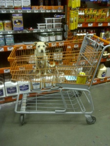 chico going to home depot 2